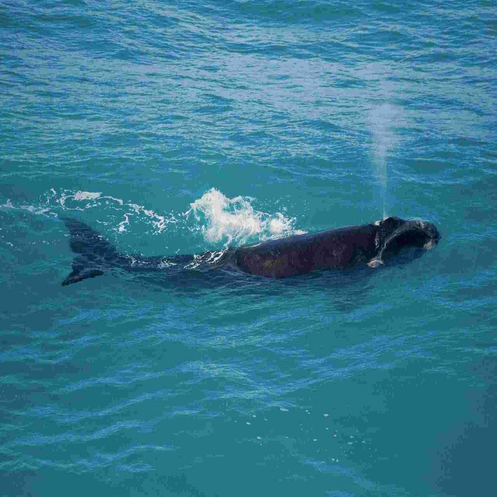 بیایید_از_حیات_وحش_اقیانوس_ها_محافظت_کنیم