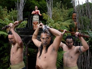 فرهنگ ماوری