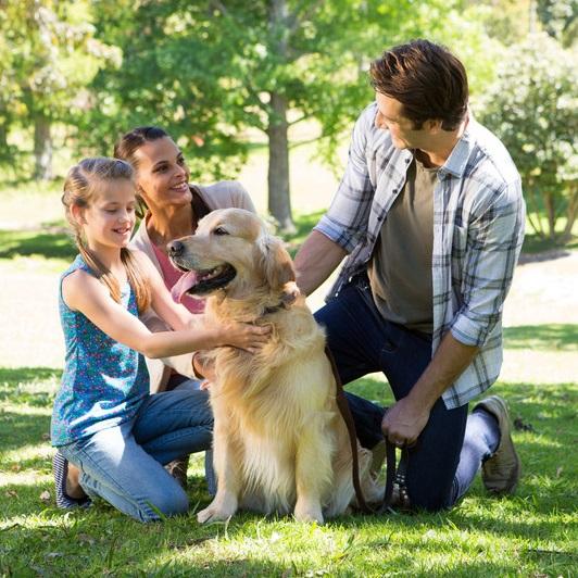 آیا سگها میتوانند بیماریهای ذهنی و قلبی انسان را درمان کنند؟