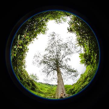 رشته محیط زیست در استرالیا