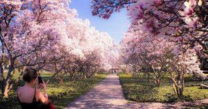 فصل بهار در انتاریو