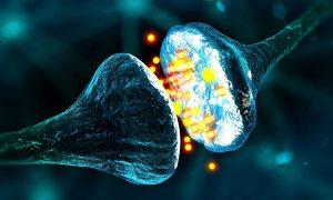 تفاوت سیناپس الکتریکی و شیمیایی در چیست؟