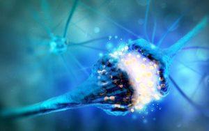 مراحل انتقال پیام عصبی در محل سیناپس چیست؟